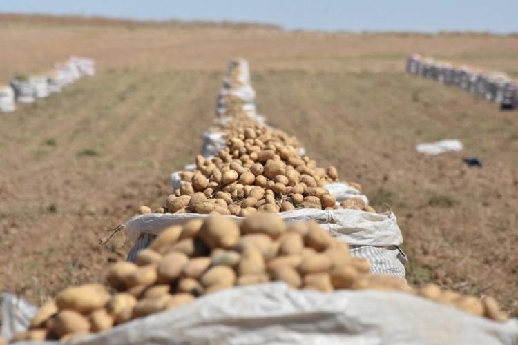 'Patates İthalatı Nedeniyle Çiftçiler Endişeli'