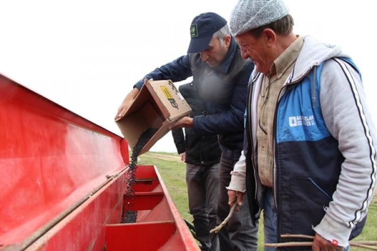 İBB, Yerli Nohut Üretimini Artırmak İçin İlk Deneme Ekimlerini Gerçekleştirdi