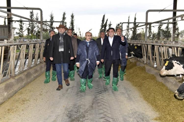 Vali Demirtaş, Doğrular Tarım'ı Ziyaret Etti