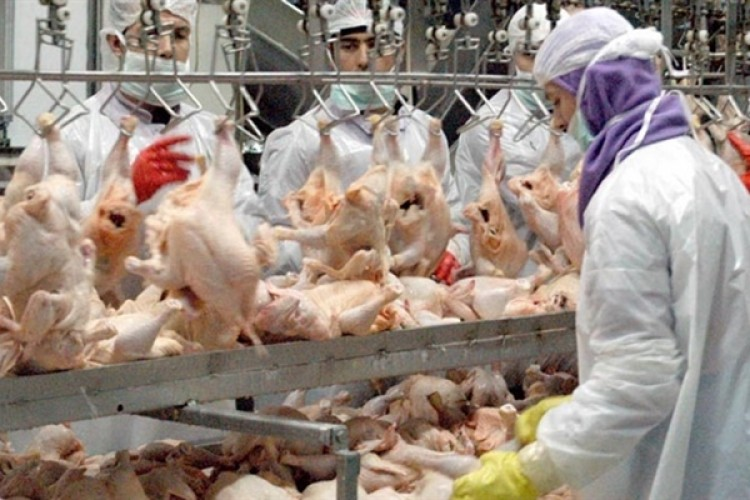 Tavuk Eti Üretimi Yüzde 3,7 Azaldı