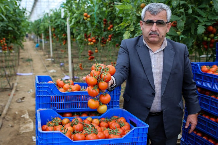 3 günde 1000 ton sebze gönderildi! 'Tanzime ürün alınmaya başlandı, rahatladık'