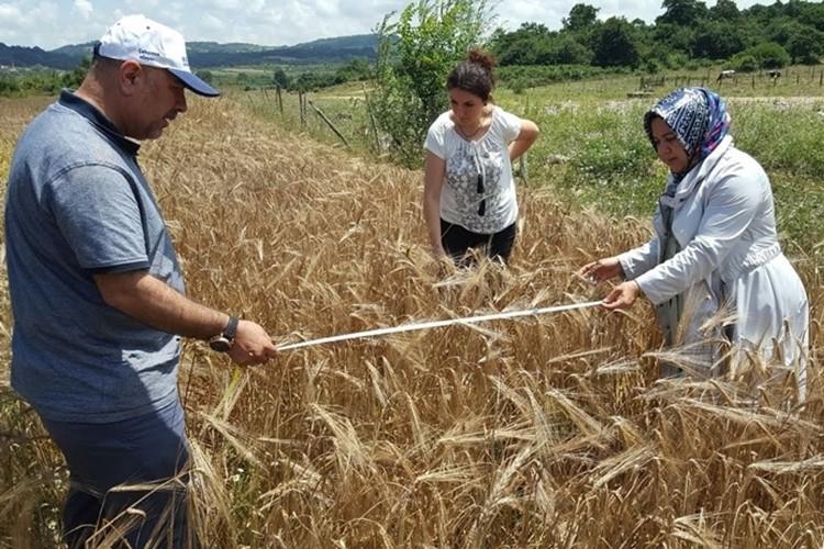 Çiftçilere Yüzde 50 Hibeli Tohum Desteği