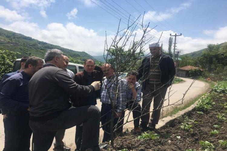 Trabzon'da Çiftçilere Yönelik İlk Kez Meyve Ağaçlarını Budama Ve Aşılama Kursu Düzenleniyor