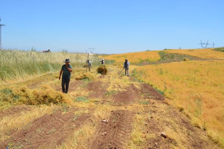 Kırmızı Mercimek ve İpek böcekçiliğinde Diyarbakır Birinci Sırada
