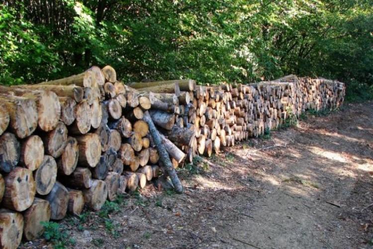 Beş yılda 115 milyon metreküp odun kesildi!