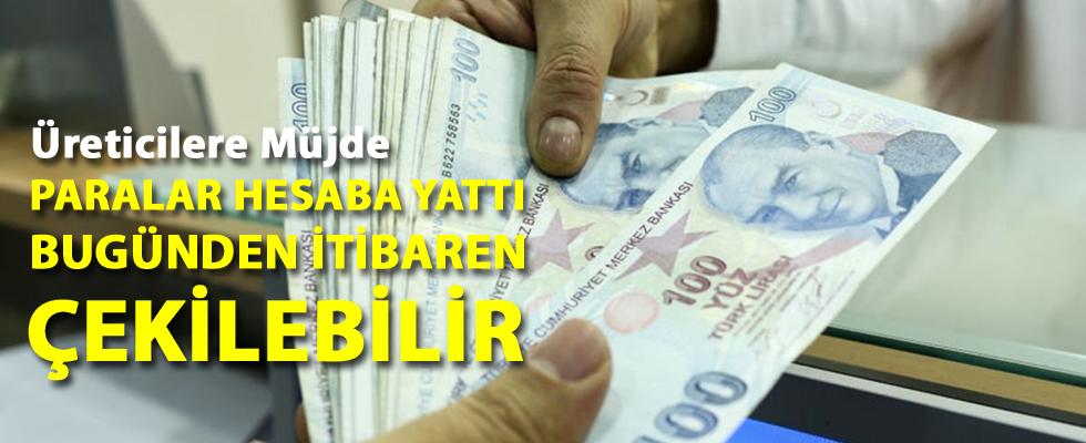 Fındık Üreticisine 75 Milyon Lira Ödeme Müjdesi