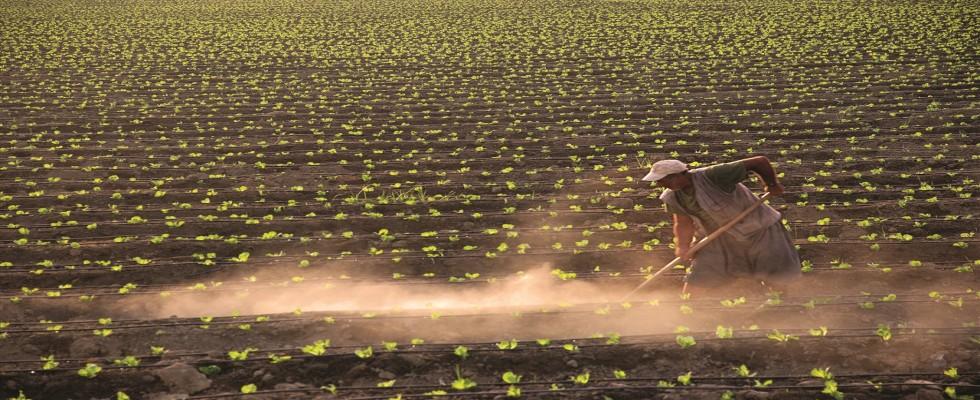 TZOB Başkanı Bayraktar: Tarım Sektörünün Öncelikli Olacağı Yeni Bir Paket Açıklanmalıdır