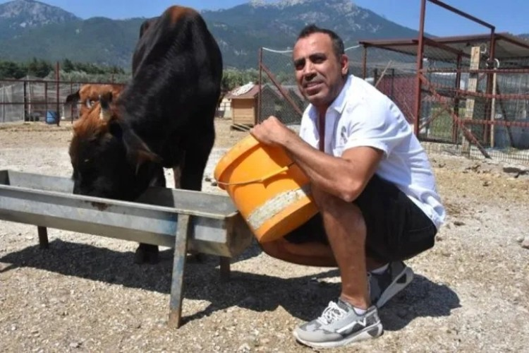 Haluk Levent'in destek olduğu fenomen boğa Ferdinand, baba oldu