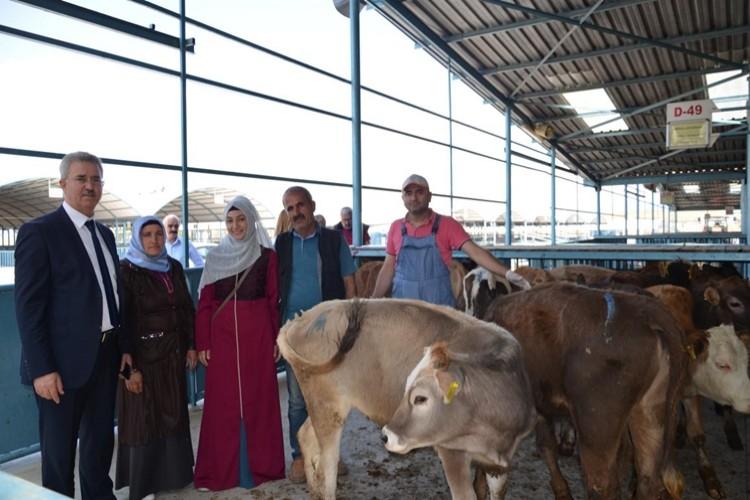 Genç Çiftçilere Büyükbaş Hayvanları Dağıtıldı