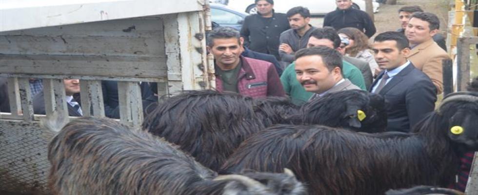 Genç Çiftçilere 148 Adet Keçi Dağıtımı Yapıldı