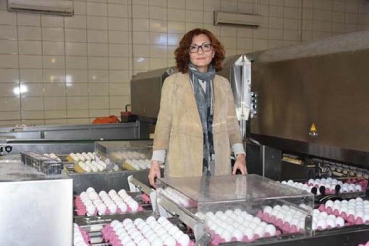 Yumurta Hakkında Önemli İddia: Aslında Fark Yokmuş