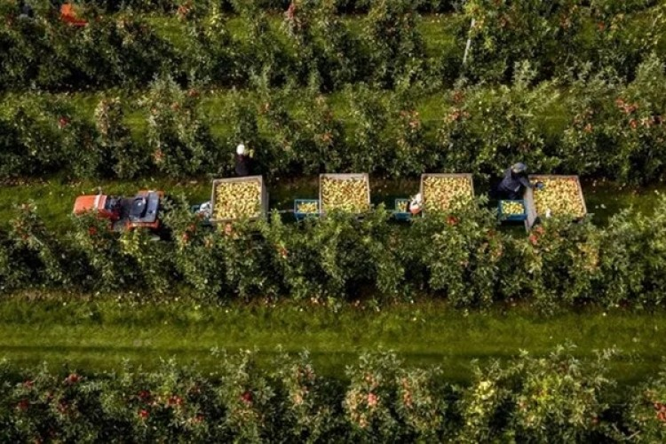 Hollanda 94,5 Milyar Euroluk Tarım İhracatı İle Dünya İkincisi Oldu