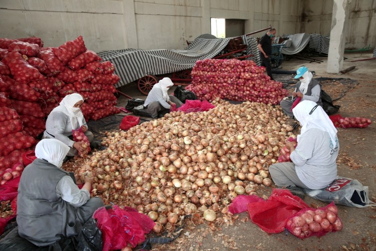 Soğanlarını Satamayan Üreticilerin Yardımına Nilüfer Belediyesi Ulaştı