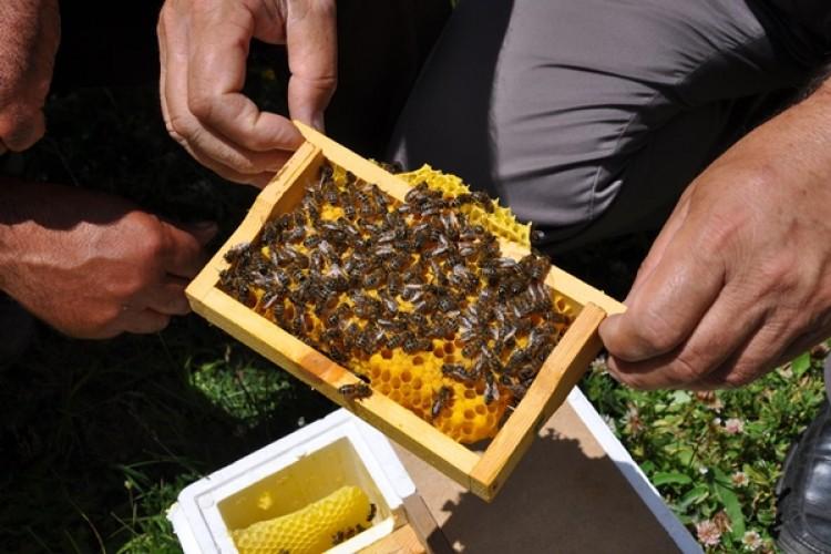 Gümüşhane Kafkas Ana Arı Üretim Üssü Olma Yolunda İlerliyor