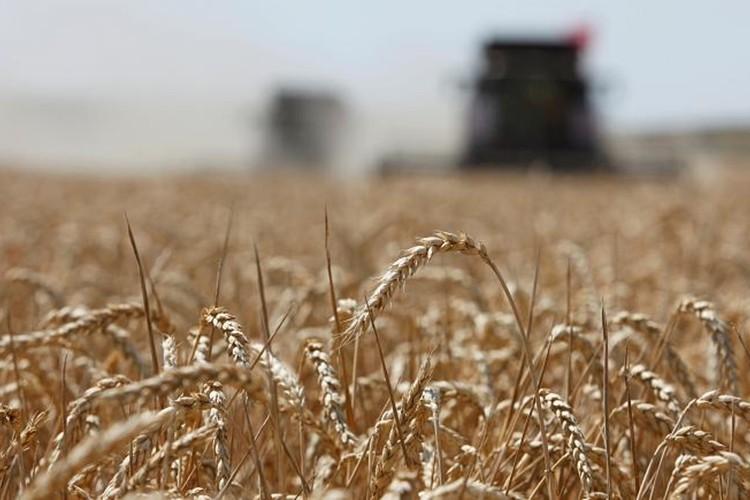 Tarım Görünüm Raporu: Gelecek 10 yılda tarımsal üretim artışı dünyada fiyatları düşük seyrettirecek