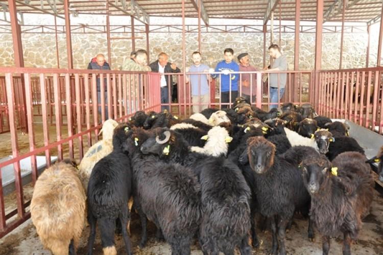 Genç Çiftçilere Bin 360 Adet Küçükbaş Hayvan Dağıtıldı