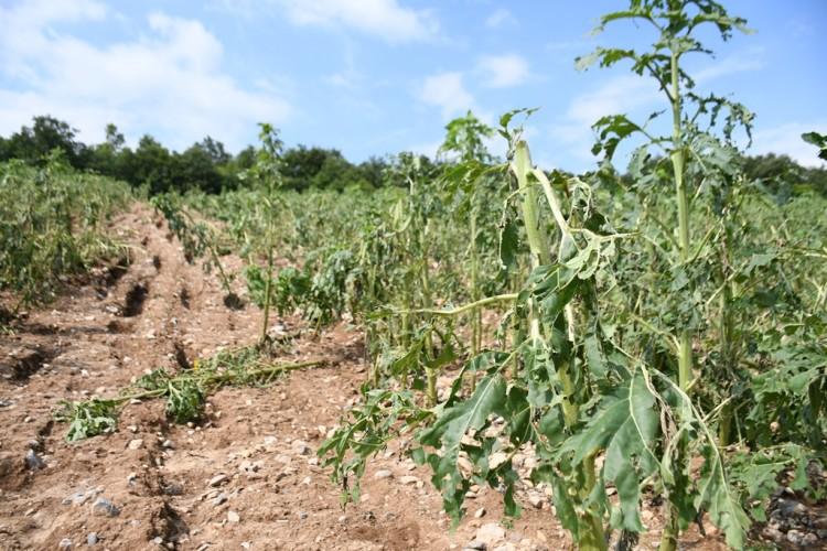 Sel Mağduru Köylere Tohum Desteği Yapılacak