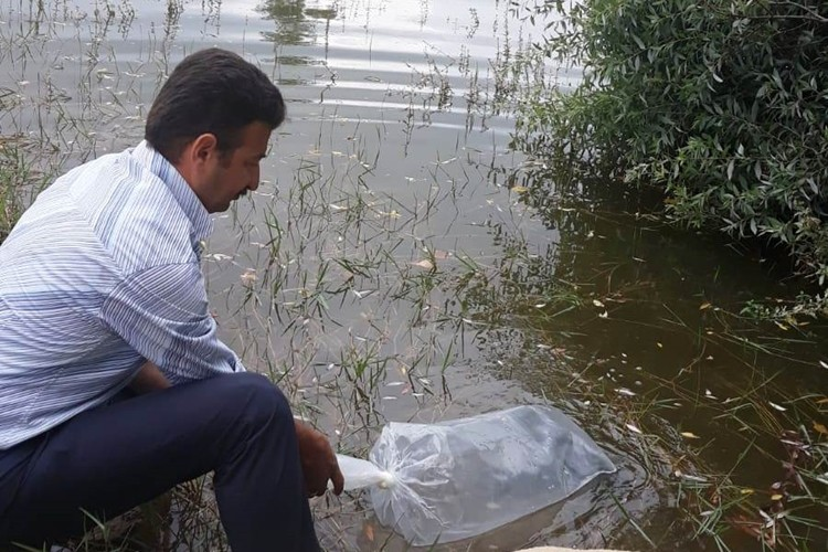 Samsun'da Göl Ve Göletlere 120 Bin Adet Yavru Balık Bırakıldı