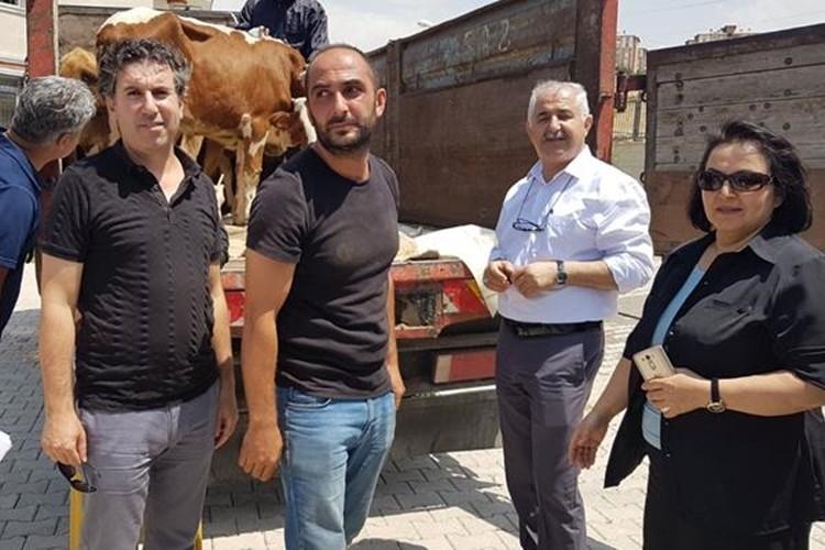 Genç Çiftçilere 585 Büyükbaş Sığırın Dağıtımına Başlandı!