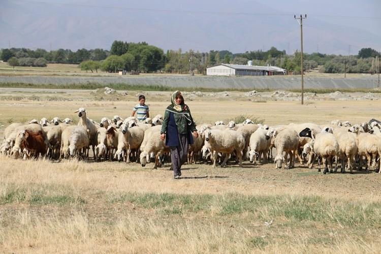 Genç Çiftçi Zeynep Hanımın Başarı Hikayesi