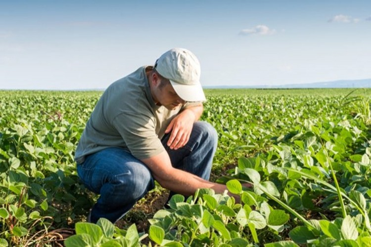 Ticaret Gerginliğinin Artması Amerikalı Çiftçileri Kara Kara Düşündürüyor