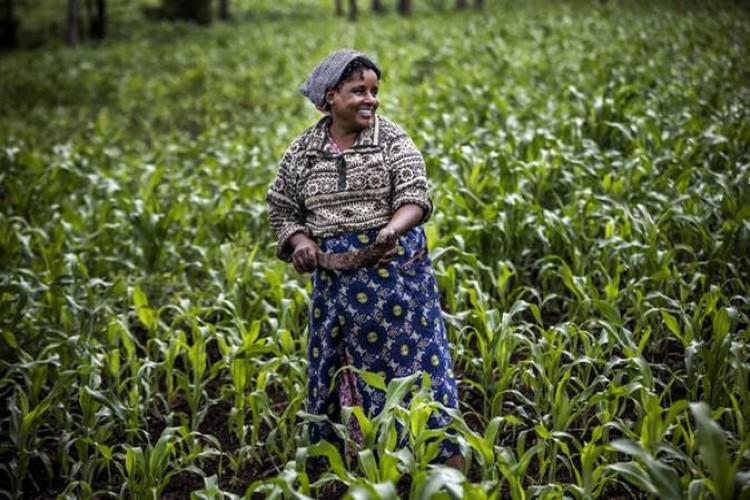 Küresel Gıda Fiyatları Temmuz ayında yükseldi