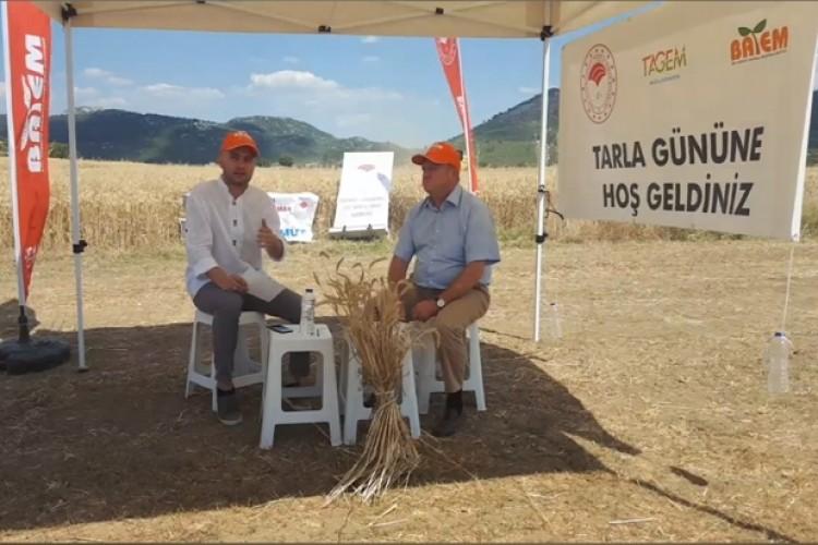 Özkan Buğday Çeşidi Online Tarla Günü İle Tanıtıldı