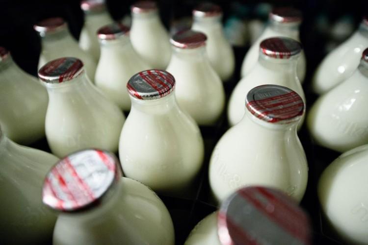 İçme Sütü Üretimi Yüzde 18 Azaldı