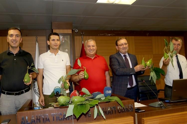ALTSO, Avokadonun Coğrafi İşaretini Alanya'ya Kazandırdı