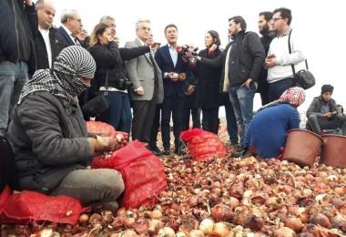 Sarıbal: Soğanlar Nehre Dökülürken Üreticinin Elinden Tutmadınız