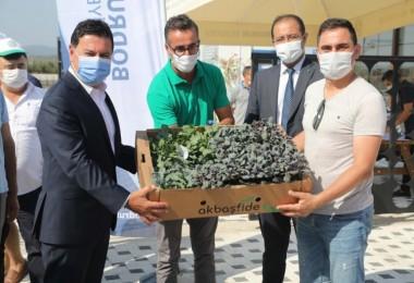 Bodrum Belediyesi'nden üreticilere  140 bin fide hibesi