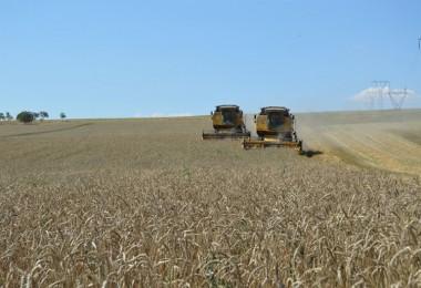 TMO, Buğdaydan Sonra Arpayı da İthal Edecek