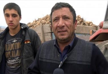 İmece Usulü İle Pancar Sökümü Tokat'ın Zile İlçesinde Yaşatılıyor