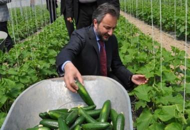 Elazığ'da serada ilk hasat