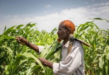 Küresel gıda fiyatları Ağustos'ta arttı