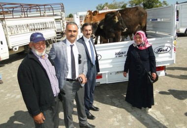 Malatya'da Genç Çiftçilere İlk Parti 190 Büyükbaş Hayvan Dağıtımı Yapıldı