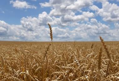 ABD'de Tarım Felaketi: 'Amerikalı Çiftçiler Rusya Yüzünden Toplu Olarak İflas Ediyor'