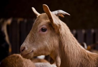 Hayvan Desteği 2018 Senesinde Ekonomide Aktif Bir Rol Oynayacak