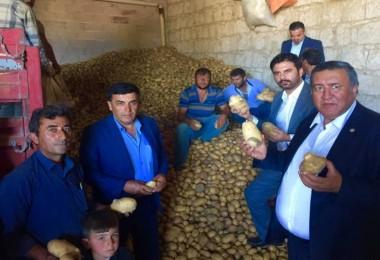 Gürer: Patates Dışsatım Düzenlemesi Üreticiye Darbedir