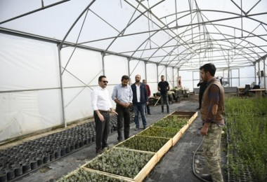 Türkiye'nin En Büyük Lavanta Vadisi Elbistan'da Olacak