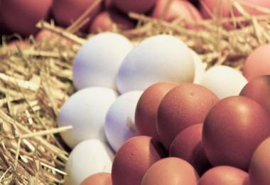 Yumurta ve Tavuk Eti Üretimi İstatistikleri Açıklandı