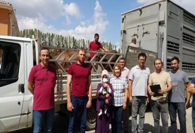 Eskişehir'de 78 Genç Çiftçiye 390 Büyükbaş Hayvan Teslim Edildi