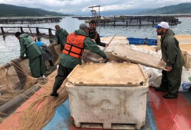 Almus'tan Avrupa'ya Balık İhracatı