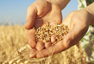 Duru: Buğday ekimini teşviklerle artırılmalıyız
