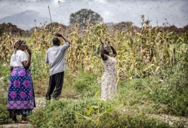COVID-19: Açlığın Pençesindeki Ve Zayıf Topluluklar Kriz İçinde Krizle Karşı Karşıya