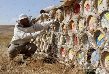 Arap Ülkelerinin Gözdesi: Karakovan Balı