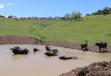 'Afrika'nın Savanası ' Değil Ordu