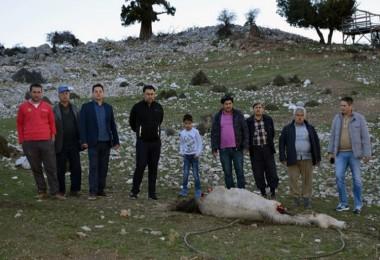 Yaylada Hayvancılık Yapanlar Duruma İsyan Etti! Devlet Çare Bulsun