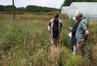 Kastamonu'da Itri ve Tıbbi Bitkiler ile Boya Bitkileri Üretim Alanları Kontrol Edildi