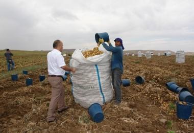 Sertifikalı Patates Tohumluğu Üretim Alanlarında Hasat Başladı